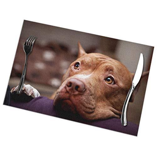 Ha99y Tovagliette per Cani per Tavolo da Pranzo Set di 6 Pezzi in Poliestere Lavabile 12x18 in tovagliette tessute in Vinile Resistenti al Calore per Decorazioni per tavoli da Cucina