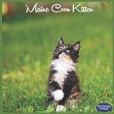 Maine Coon Kitten Calendar 2022: 16 Month Squire Calendar 2022