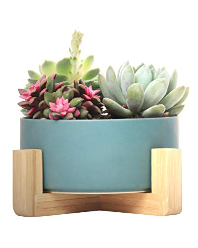 SAROSORA Ceramic Large Succulent Planter 6'' Bonsai Pot with Bamboo Tray Mid Century Modern Decoration for Living Room Tabletop (6'', Green)