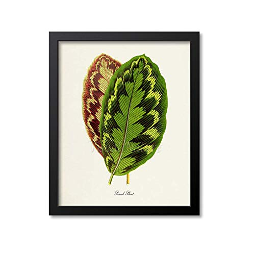 Pauw Plant Art Print Pauw Plant Botanische Kunst Print Muur Kunst Botanische Print Bruin Groen Bladeren Calathea makoyana