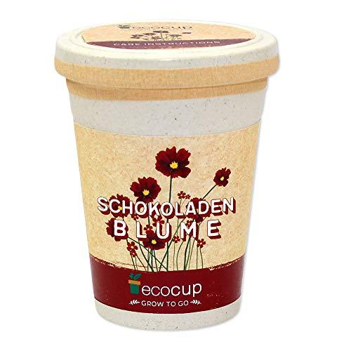 Ecocup, Schokoladenblume, Nachhaltige Geschenkidee (100% Eco Friendly), Grow Your Own/ Anzuchtset, Pflanzen im Coffee Cup, Made in Austria