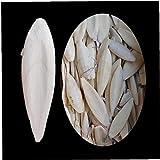 1 Bolsa de Calcio de Hueso de Sepia Sepia Bone IA Calamares Bird Food Pickstone Mascotas