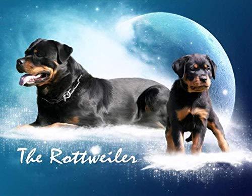 LSDEERE Gör-det-själv målning efter siffror stjärnhimmel Rottweiler målning med siffror med borste och akrylmålning enligt siffror för vuxna dukar för livet 40 x 50 cm (ingen ram)