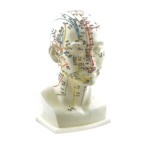 HeineScientific Kopf-Akupunkturmodell