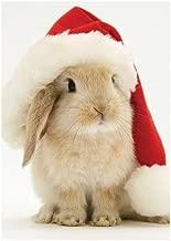Santa Bunny Holiday Half Notecard