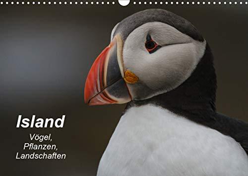 Island: Vögel, Pflanzen, Landschaften (Wandkalender 2021 DIN A3 quer)