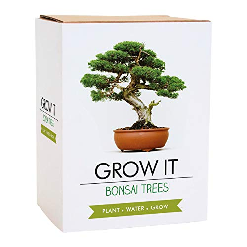 Gift Republic Grow It Geschenkset Bonsai-Pflanzset