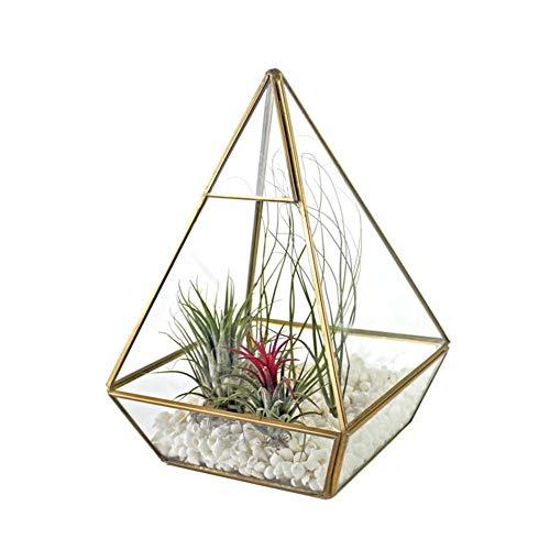 Glazen potje voor vetplanten, eenvoudige en unieke vorm, handgemaakt, voor vele scènes Goud