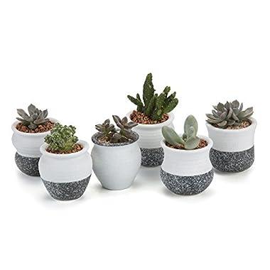 T4U 2.25 Inch Ceramic Mini Korea Style Snow Serial Full Set succulent Plant Pot Cactus Plant Pot Flower Pot Container Planter Package 1 Pack of 6