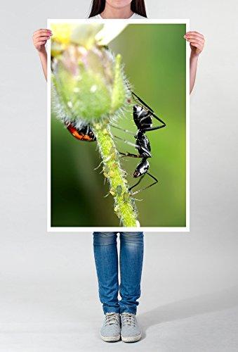 Best for home Artprints - dierfotografie - zwarte kever en mier op een bloem fotodruk in haarscherpe kwaliteit LEINWANDBILD gespannt 90x60cm
