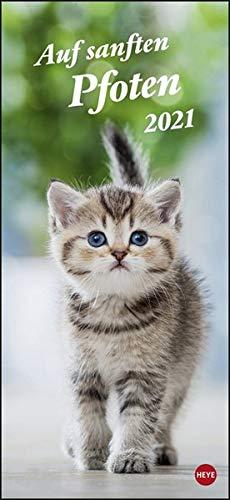 Katzen slim - Auf sanften Pfoten Kalender 2021