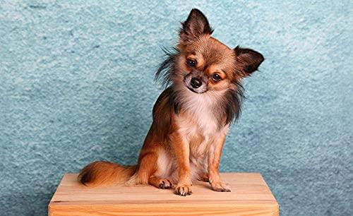 QGHMV DIY Kit de Broderie au Point de Croix compté Motif Chihuahua 11ct Cross Stitch Kits pré-imprimés de Broderie Coton pour Starter Kit de Couture àla Main 16x20 Pouces