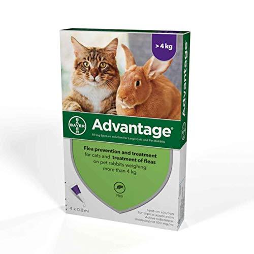 Ventaja 80mg solución Spot-on para gatos grandes y Pet (más de 4kg), diseño de conejos