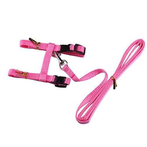 Einstellbares Katzen-Halsband aus strapazierfähigem Nylon, kleine Tierleine für Spaziergänge