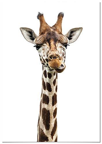 Panorama Poster Jirafa 50x70cm - Impreso en Papel 250gr - Poster de Animales - Cuadros de Animales Decorativos - Cuadros de Salón Modernos - Cuadros Decoración Dormitorio