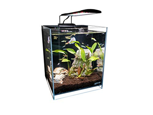 Lifegard 5 Gallons Beveled Edge Low Iron Ultra Clear Aquarium with Back Filter - 9.84' x 9.84' x 11.81'