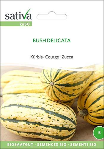 Sativa Rheinau kü50 Kürbis Bush Delicata (Bio-Kürbissamen)