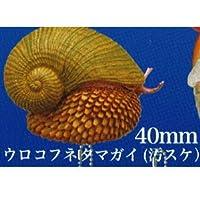ネイチャーテクニカラーMONO PLUS 深海生物 ボールチェーン&マグネット [8.ウロコフネタマガイ(汚スケ)](単品)