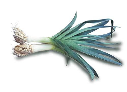 100 graines Bio - POIREAU Bleu de Solaise - Certifié AB - Allium porrum