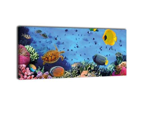 wandmotiv24 Leinwandbild Panorama Nr. 388 Korallenriff mit Fischen 100x40cm, Keilrahmenbild, Bild auf Leinwand, Unterwasser Riff Tauchen