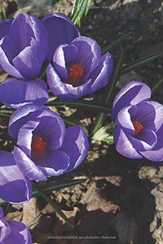 Krokus Notizbuch: Frühling Blumen - Krokus | Paperblank Tagebuch / Notizbuch mit 120 Seiten