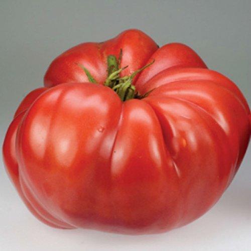 Crimson géant Graines de tomate! RARE HEIRLOOM énorme!