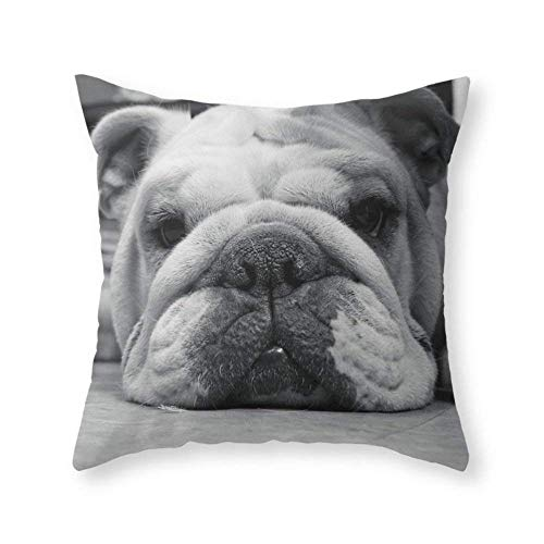 Funy Decor Black and White Throw Pillow Covers Bulldog Photography Printed Decorative Square Cushion Cases Pillowcases for Sofa Bedroom Car 18 x 18 Inch