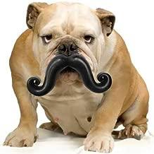 MOODY PET Humunga Stache Junior Dog Toy for Medium-Large Dogs