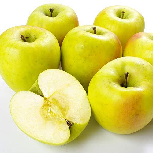 国華園 食品 りんご 青森産 ぐんま名月 10kg 1箱