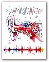 耳システム医療解剖学壁アートバイノーラル聴覚アートキャンバスポスタープリントオーディオウェーブペインティングクリニックドクターオフィスインテリア写真40x60cmフレームなし