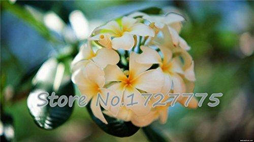 livraison gratuite fleur d'oeuf 30 pièces un paquet emballage d'origine