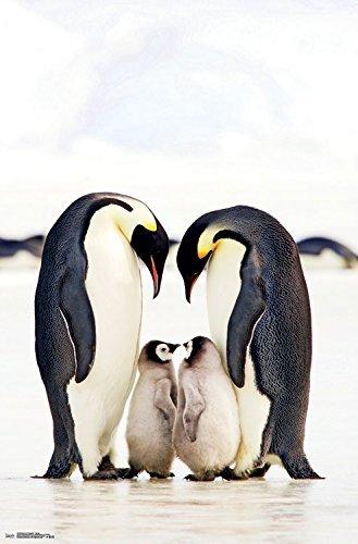 YISUMEI Hem Gewichte Vorhang Duschvorhang Anti-Schimmel Duschvorhangringe Wasserabweisender 180x200 cm Pinguine Gruppe