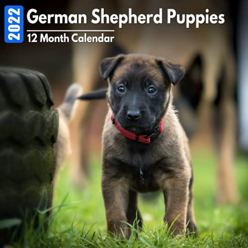 Calendar 2022 German Shepherd Puppies: Cute German Shepherd Puppy Photos Mini Calendar a Monthly Square Book Planner With Inspirational Quotes each Month