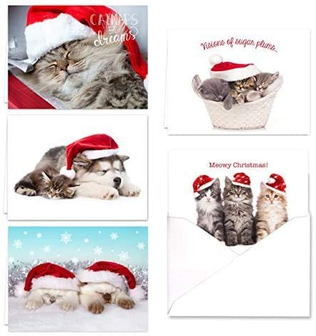 Christmas Cats Holiday Card Assortment Pack / 25 Seasonal Kitten Greeting Cards And Envelopes / 5 Sleeping Santa Animal Designs And Christmas Messages