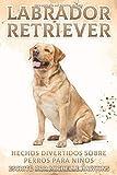 Labrador Retriever: Hechos divertidos sobre perros para niños #8