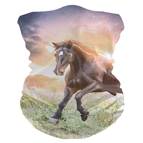BOLIMAO Schutzmaske für Pferde bei Sonnenuntergang, atmungsaktiv, multifunktional, waschbar, Halstuch für Sonne, UV- und Staub, Wind