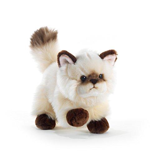 Plüschtier Katze Thaytoo - 21 cm
