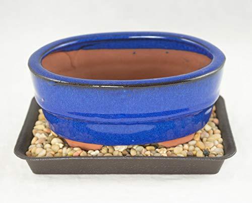 6.25 ' Oval Blue Shohin Bonsai / Succulent Pot + Tray + Rock + Mesh Combo