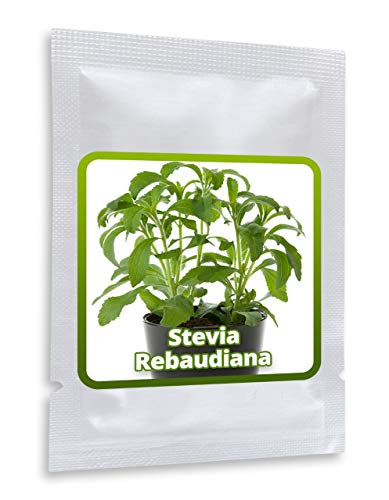 Stevia rebaudiana - Herbe Douce 1 portion env. 100 graines / pack