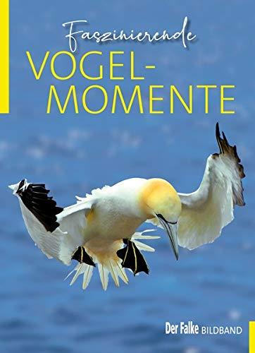Faszinierende Vogelmomente: DER FALKE Bildband