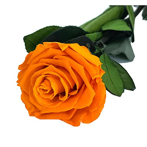 Mundo Eterno Rosa Eterna Preservada 35cm Naranja