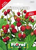 Sementi da fiore di qualità in bustina per uso amatoriale (FRAGOLE DI BOSCO)