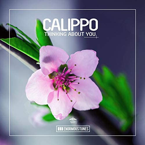 Calippo