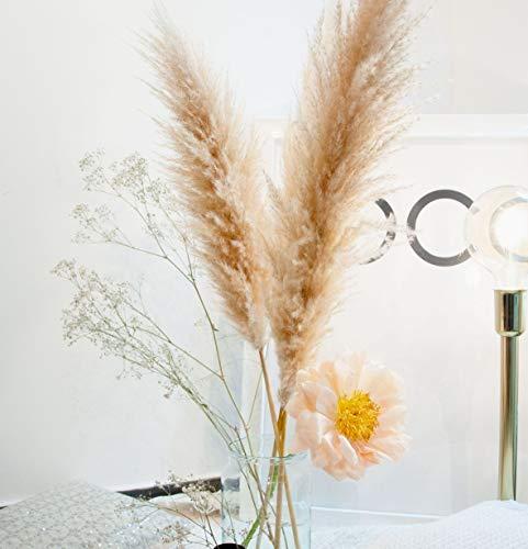 Pampasgras im 3er Set XL 120cm beige natürlich getrocknet und extra flauschig Design Deko für Inneneinrichtung und Wohnung Dekoration Modern Trockenblumen für Hochzeit