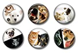 Cute Locker Magnets For Teens - Cats & Dogs - School Supplies - Whiteboard Office or Fridge - Funny Magnet Gift Set (Cats & Dogs)