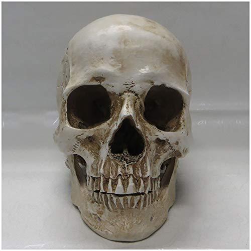 FXQ Jefes de Resina del cráneo - Realista Resina cráneo Humano Modelo Réplica - Ciencia Anatomía Cabeza del cráneo del Hueso Médico Dibujo del Arte del Modelo de Referencia para los Artistas,B
