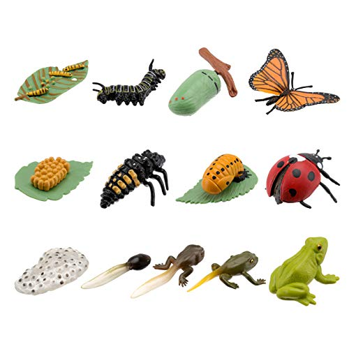 TOYANDONA 3 Ensembles Insectes Figurines Vie Cycle Chiffres de Grenouille Coccinelle Papillon Enfants Éducation Précoce Figures Animales Biologie Sciences Jouets