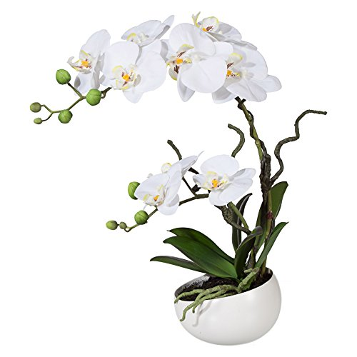 wohnfuehlidee Kunstpflanze Phalenopsis (Orchidee), Farbe weiß, mit Deko-Keramik-Schale, Höhe 42 cm