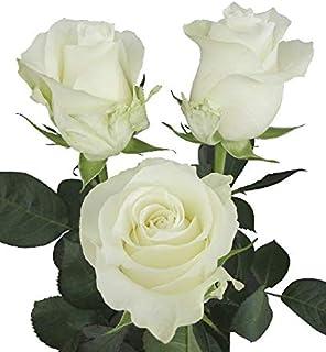 e5c4a7df96b Dream Cut Flowers - White Fresh Cut Roses Directly from Ecuador (24)