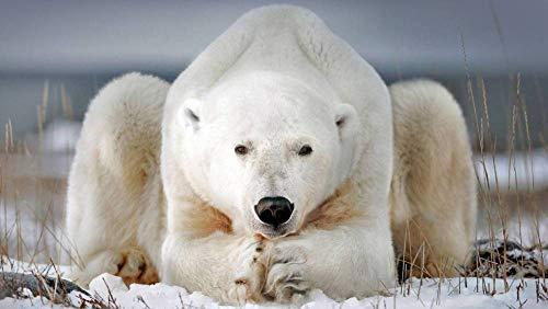 zhangshifa Jigsaws Puzzles 1000 Pieces,Oso Polar Blanco En Churchill Townrompecabezas De Paisajes Naturales,Juego De Rompecabezas para Niños Adultos-75 * 50Cm